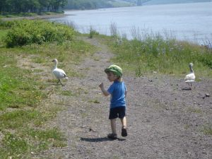 Waddling along down by the river